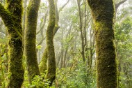 树干上的苔藓图片(11张)