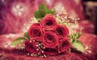 娇艳欲滴的玫瑰图片(6张)