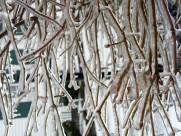 冰雪植物图片(20张)