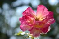 春天各种鲜艳的花朵图片(15张)