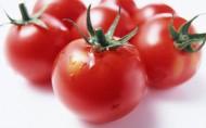 红红的番茄图片(16张)
