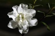 杜鹃花图片(8张)