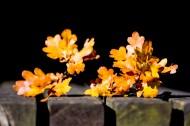 树叶图片(9张)