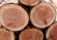 树桩木材图片(47张)