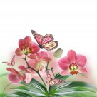 各种颜色的蝴蝶兰图片  (16张)