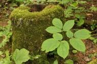 苔藓树桩图片(12张)