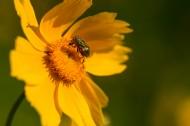 黄色菊花图片(7张)