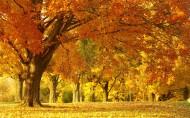 唯美秋天的树图片(15张)