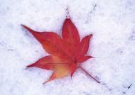 冰雪和植物图片(19张)