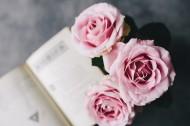 娇滴的粉玫瑰图片(17张)
