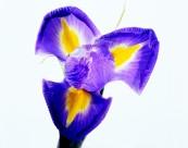 花卉枝节特写图片(75张)