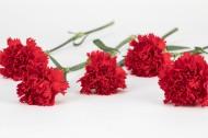 热情似火的红色康乃馨图片(9张)