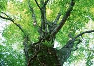 茂盛的树木图片(36张)