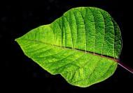 一片绿色的树叶图片(10张)