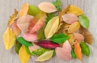 五颜六色的树叶图片(15张)