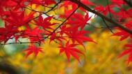 唯美的香山红叶图片(10张)