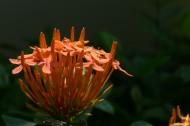 绣球花图片(11张)