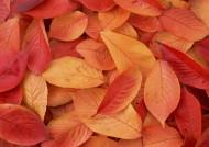 秋季落叶背景图片(26张)