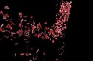 玫瑰花瓣图片(7张)