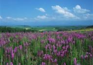粉色花丛图片(31张)
