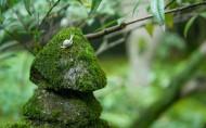 绿色的青藓图片(9张)