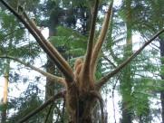 笔筒树图片(6张)