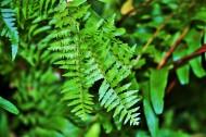 树厥植物图片(15张)