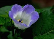 蓝紫色小野花图片(20张)