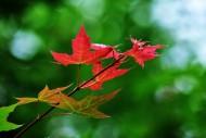 秋天萧瑟的枫叶图片(14张)