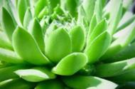 可爱漂亮的多肉植物盆栽图片(20张)
