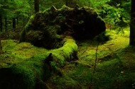 湿漉漉的苔藓图片(13张)