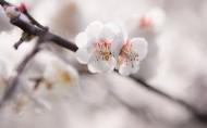 梅花图片(20张)