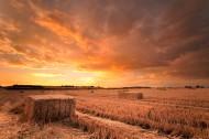 农作物丰收图片(11张)