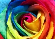 艳丽的玫瑰花图片(30张)