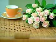 玫瑰花图片(21张)