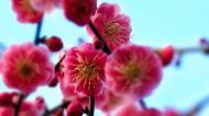 春季唯美桃花图片(12张)