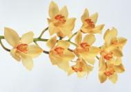 黄色花朵图片(19张)