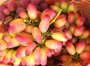 架子上熟透的葡萄图片(9张)