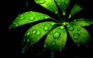 植物上晶莹的露珠图片(24张)