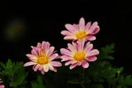 路边灿烂的野花图片(7张)