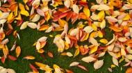 深秋的落叶图片(14张)