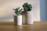 可爱的小型盆栽图片(22张)