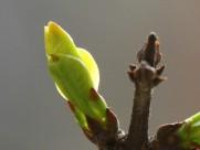 春天的嫩芽图片(12张)