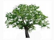 漂亮的景观树木图片(15张)