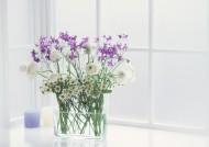 居家紫色插花图片(49张)