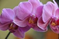 淡雅的兰花图片(16张)