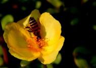 半枝莲花卉图片(11张)
