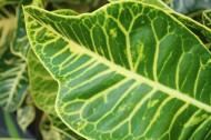 绿色叶子的脉络图片(24张)