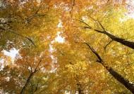 秋季树木图片(26张)