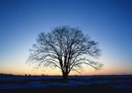 夕阳下的树木图片(26张)
